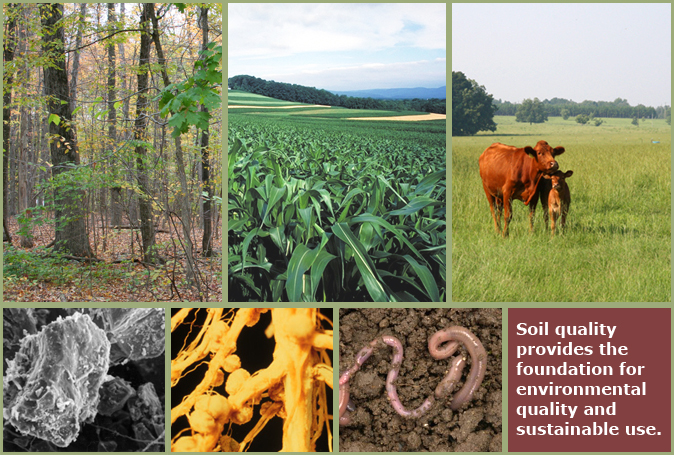 Soil quality for environmental health for Soil quality indicators